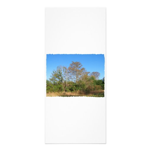 Escena de la Florida Cypress calvo en un pantano Tarjetas Publicitarias