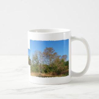 Escena de la Florida Cypress calvo en un pantano Tazas