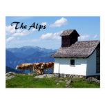 Escena de la montaña de las montañas con las vacas tarjetas postales