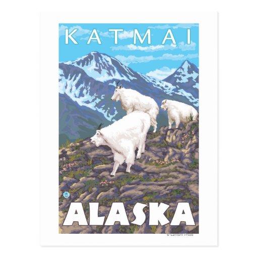 Escena de las cabras de montaña - Katmai, Alaska Tarjetas Postales