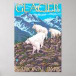 Escena de las cabras de montaña - Parque Nacional  Poster