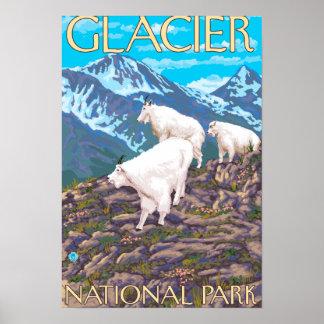 Escena de las cabras de montaña - Parque Nacional  Póster