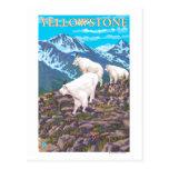 Escena de las cabras de montaña - parque nacional  tarjeta postal