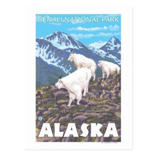 Escena de las cabras de montaña - parque nacional tarjetas postales