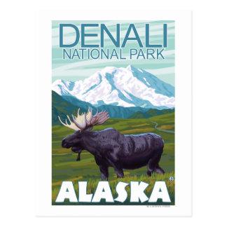 Escena de los alces - parque nacional de Denali A Tarjeta Postal