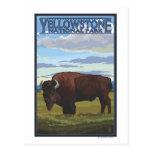 Escena del bisonte - parque nacional de postal