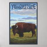 Escena del bisonte - parque nacional de Yellowston Posters