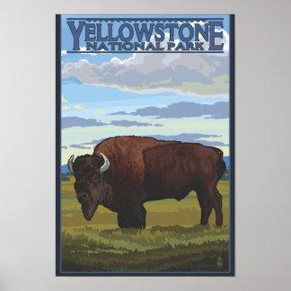 Escena del bisonte - parque nacional de Yellowston Póster