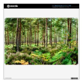 Escena del bosque de Hampshire Inglaterra del brez Calcomanía Para El MacBook