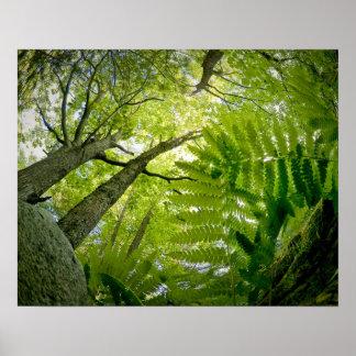 Escena del bosque en el parque nacional del Acadia Póster