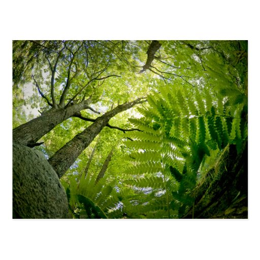 Escena del bosque en el parque nacional del Acadia Postal