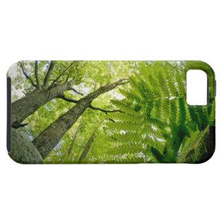 Escena del bosque en el parque nacional del iPhone 5 fundas