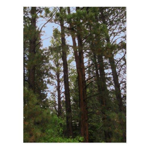 Escena del bosque tarjeta postal
