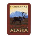 Escena del caribú - Fairbanks, Alaska Imanes De Vinilo