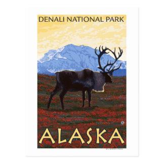Escena del caribú - parque nacional de Denali, Postales