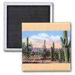 Escena del desierto de Arizona Sonoran Imán De Nevera