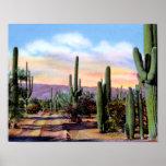 Escena del desierto de Arizona Sonoran Poster