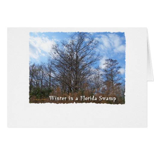 Escena del invierno del pantano de la Florida Tarjeta De Felicitación