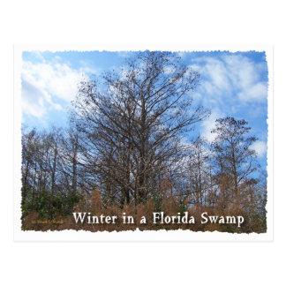 Escena del invierno del pantano de la Florida Tarjetas Postales