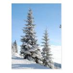 Escena del invierno Nevado con los árboles de navi Tarjeta Postal