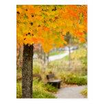 Escena del otoño postal