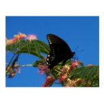 Escena del paisaje del placer de las mariposas postal