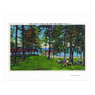 Escena del parque de estado del lago Cayuga Postales