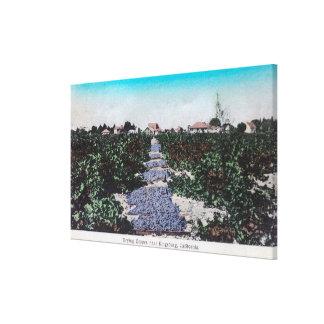 Escena del viñedo de las uvas DryingKingsburg, CA Impresión En Tela