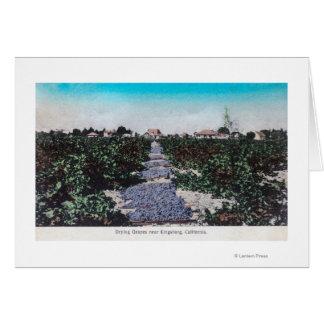 Escena del viñedo de las uvas DryingKingsburg, CA Tarjeta De Felicitación