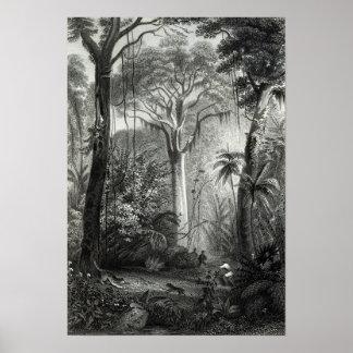 Escena en un bosque brasileño grabado cerca póster
