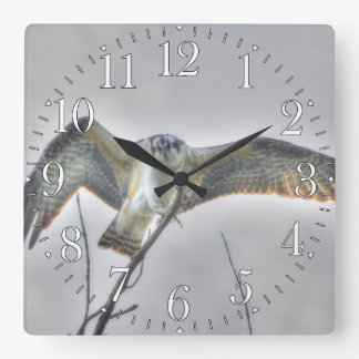 Escena juvenil de la foto de la fauna de Osprey Reloj Cuadrado