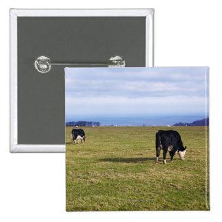 Escena pastoral de vacas en la desatención del pin cuadrado