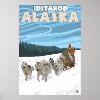 Escena Sledding del perro - Iditarod, Alaska Póster