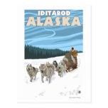 Escena Sledding del perro - Iditarod, Alaska Tarjeta Postal