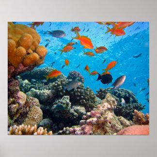 Escena subacuática póster