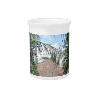 Escena tropical de la playa