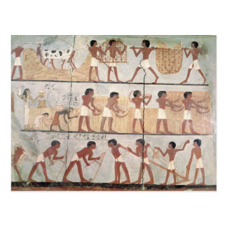 Escenas de la siembra de la tumba de Unsou Tarjetas Postales