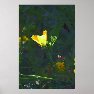 Escenas del jardín luz pasada impresiones
