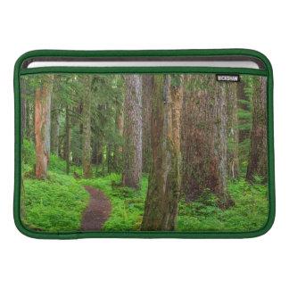 Escénico de bosque del viejo crecimiento funda macbook air