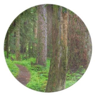 Escénico de bosque del viejo crecimiento plato para fiesta
