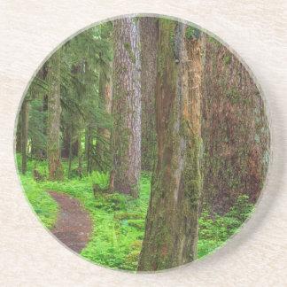 Escénico de bosque del viejo crecimiento posavasos de arenisca