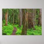 Escénico de bosque del viejo crecimiento póster