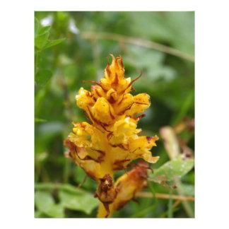 Escoba de la petasita (flava de Orobanche) Plantillas De Membrete