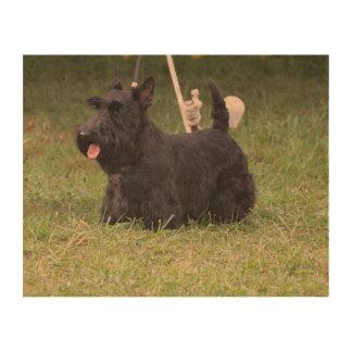 Escocés adorable Terrier Impresión En Corcho