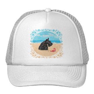 Escocés curioso en la playa gorro