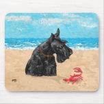 Escocés curioso en la playa tapetes de ratón