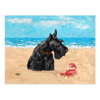 Escocés curioso en la playa tarjeta postal