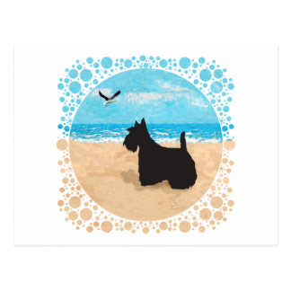 Escocés en la playa con la gaviota postales