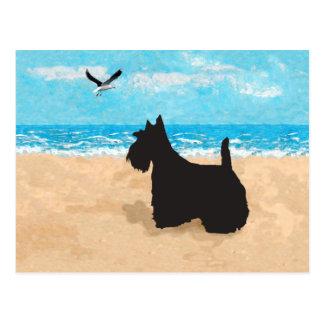 Escocés en la playa con la gaviota tarjeta postal