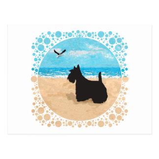 Escocés en la playa con la gaviota postal